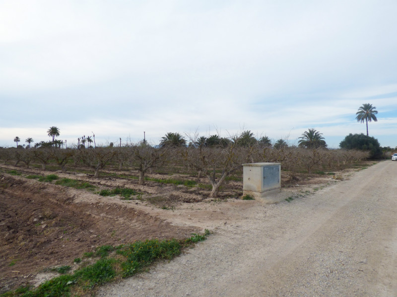 Resale - Plot - Elche - Elche
